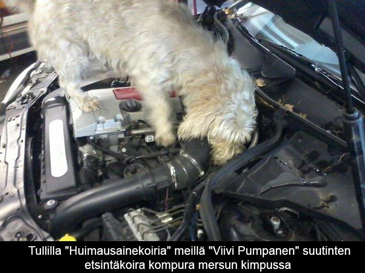 Engine | fuelflexfinland.fi